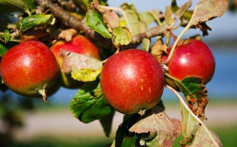 夏季最适合吃五种水果